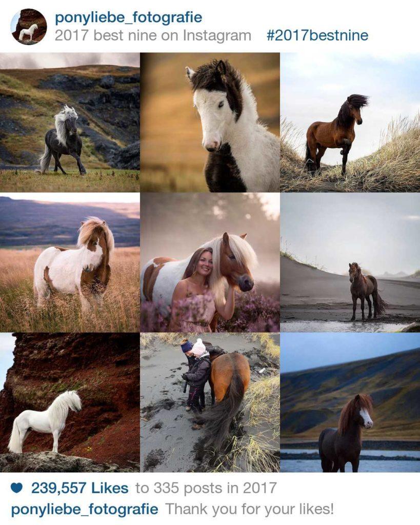 Lieblingsbild, Bild, Pferdefotografie, Pferde, Ponys, Instagram, Ponyliebe, BestNine