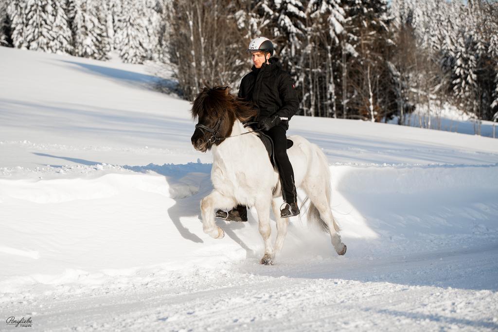 Isländer, Winter, Winterzauber, Islandpferd, Ponyliebe Fotografie, Portfolio Tag, Bayern, Bayerischer Wald, Riedelsbach, Fotoworkshop, Tölt