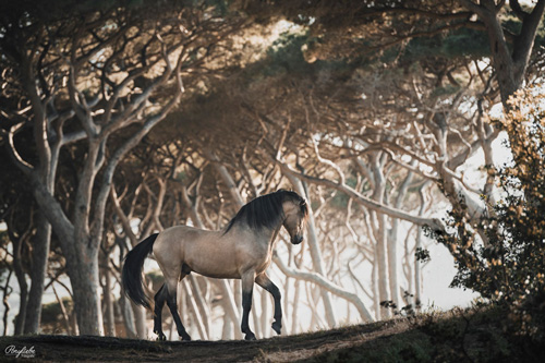 braunes Pferd im Wald mit Sonnenschein