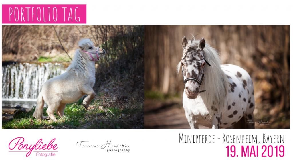 Minipferde, American Miniature Horse, Portfolio Tag, Fotografie Bayern, Perdefotografie