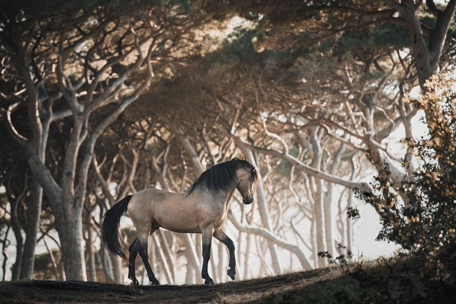 braunes Pferd steht im Wald mit Sonneschein