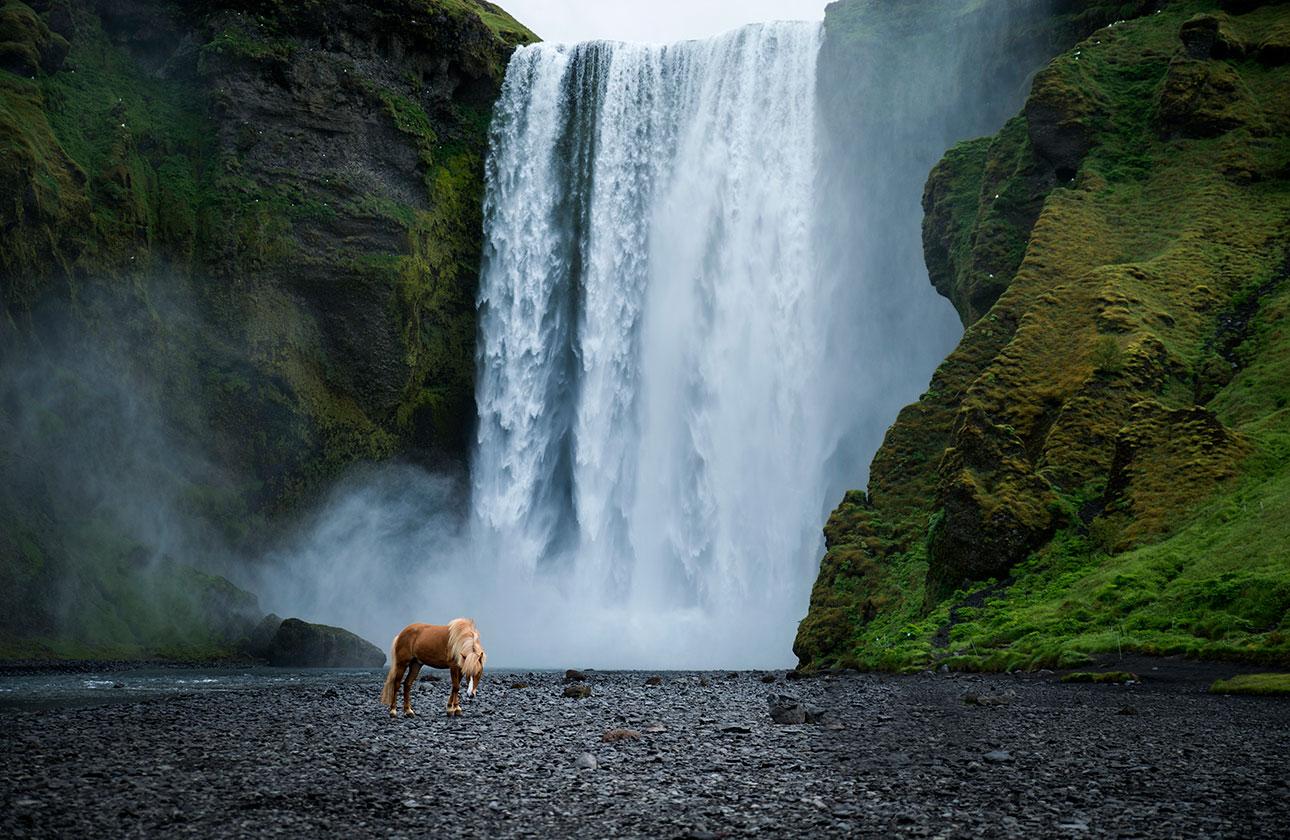 Fuchs Skogafoss Wasserfall Chasing Waterfalls