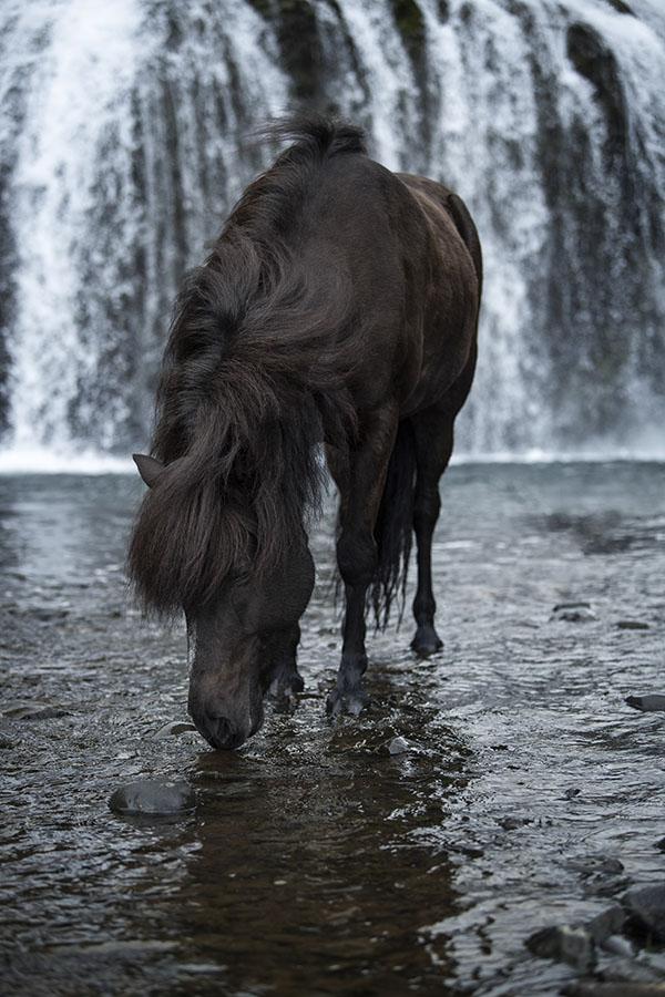 chasingwaterfalls_Stjórnarfoss_Rappe_Isländer_durstig