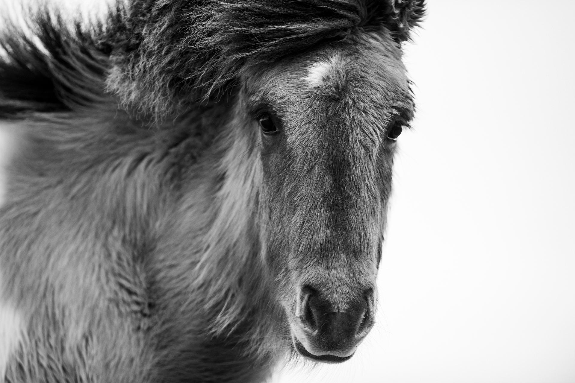 curious-soundofsilence-ponyliebe