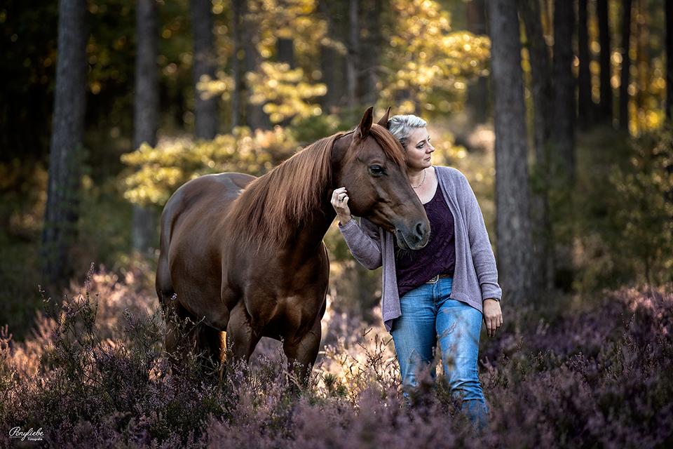 Pferdefotografie in der blühenden Heide bei Nürnberg