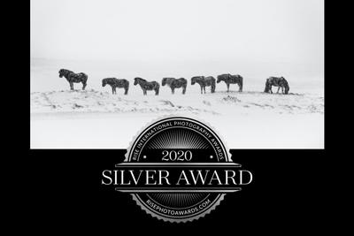 silver_award_ponyliebe_fotografie_vorschau