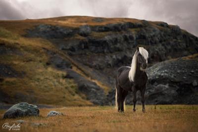 10_Aussagen_die_jeder_Pferdefotograf_kennt_isländer_island_shooting_ponyliebe_vorschau